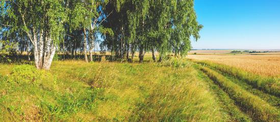 Papiers peints Bosquet de bouleaux Summer sunny landscape with birch grove and wheat fields