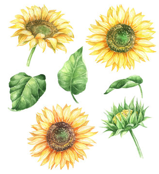 Watercolor floral illustration with sunflowers and greenery.