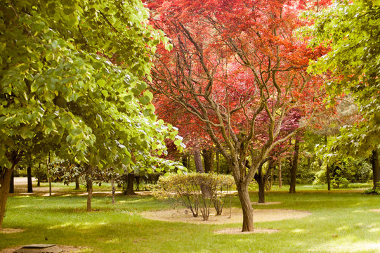 Beautiful spring park landscape with varieties of green and red trees
