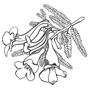 Hand-drawn Jacaranda Flowers Vector Illustration