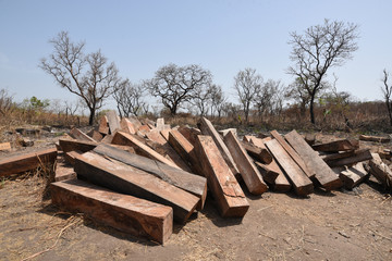 Piles of rosewood logs are seen at a makeshift depot near the Outamba-Kilimi national