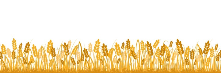 Cartoon yellow wheat field background isolated on white. Golden autumn harvest oat grain natural rural meadow farm agriculture landscape backdrop vector flat illustration Papier Peint