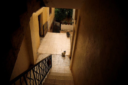 A cat is seen at a home in al-Fari'ah refugee camp in the Israeli-occupied West Bank