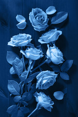 Fototapete - trend color of the year 2020 classic blue. rose flowers over dark blue background