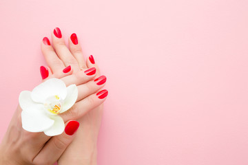 Beautiful woman hands with red nails on light pink table background. Pastel color. White orchid flower. Closeup. Manicure, pedicure beauty salon concept. Empty place for text or logo. Top down view.