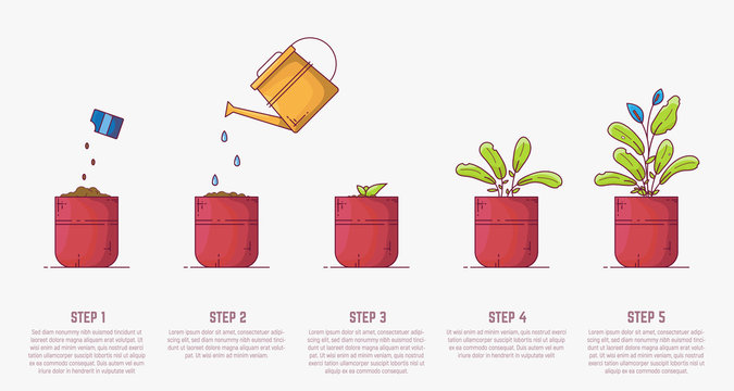 Growing plant stages. Seeds, watering can, sprout and grown plant. House plant in flowerpot. Line style flat illustration of house plant with leaves in pot. Thin lines. Growing process.