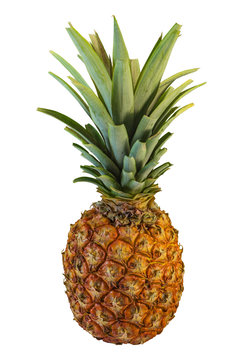Big fresh ripe canarian Pineapple isolated on red background