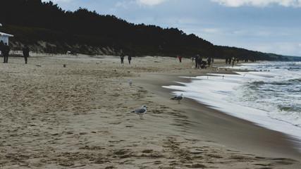 Plaża Morza Bałtyckiego