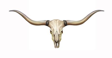 longhorn skull with horns