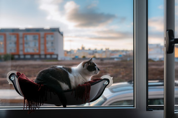 gato blanco y negro acostado en una hamaca junto a la ventana, toma el aire y mira al exterior Wall mural