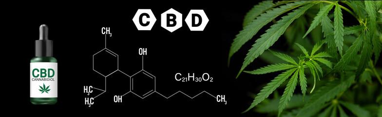 cannabis marijuana plan on black background with image of THC and CBD formula Fototapete