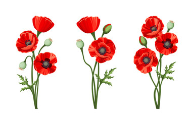 Fototapeta Vector red poppies isolated on a white background. obraz