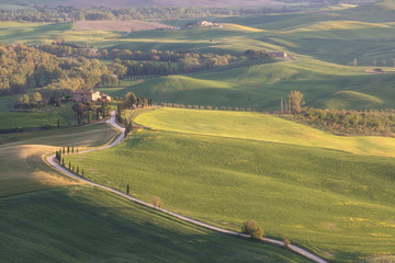 Foto auf Leinwand Lavendel Beautiful colors of green spring panorama landscape of Tuscany. Most popular place in Italy. Green fields and blue sky and Cypress tree scenic road near Siena. Travel holiday background concept