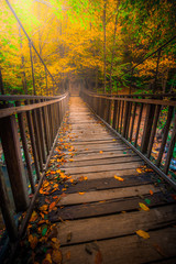 Poster de jardin Ponts wooden bridge in the forest