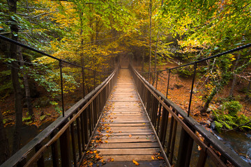 Wall Murals Road in forest wooden bridge in the forest