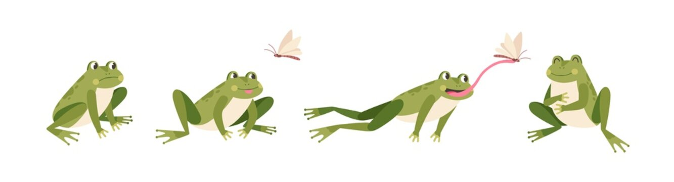 Set of cartoon hungry frog sad, smile, resting and hunting isolated on white background. Funny toad jump catch butterfly by tongue vector flat illustration. Collection of colorful cute amphibian