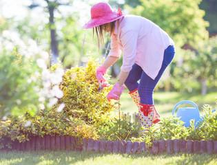 Woman gardener trimmig euonymus bushes in the garden
