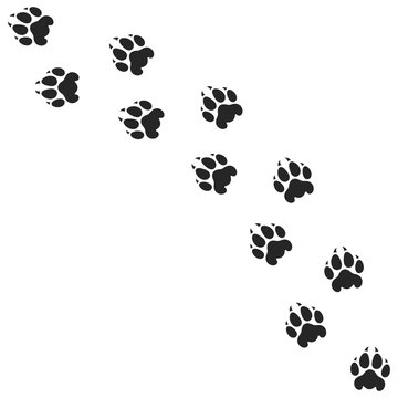 Lion paw print. Silhouette. Isolated paw prints on white background