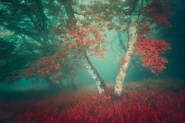 Wall Mural - foggy forest in autumn with orange and teal colors