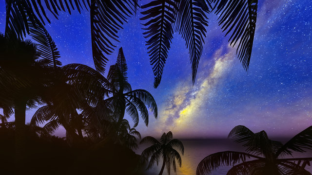 palm trees, sunset and the starry sky 3d rendering