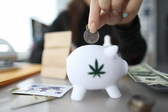 Close-up of female hand putting money to white piggy bank with marijuana sign. Woman holding silver coin. Moneybox on table. Thrift-box and investment concept