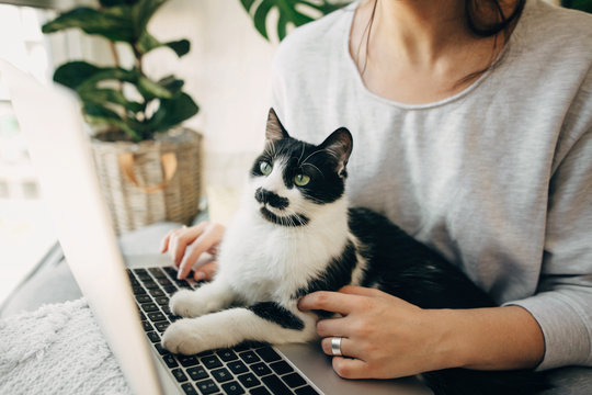 Young woman using laptop and cute cat sitting on keyboard. Faithful friend. Casual girl working on laptop with her cat, sitting together in modern room with pillows and plants. Home office.