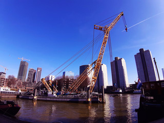 Poster Swan blue panorama of the Erasmus bridge from Rotterdam on the river
