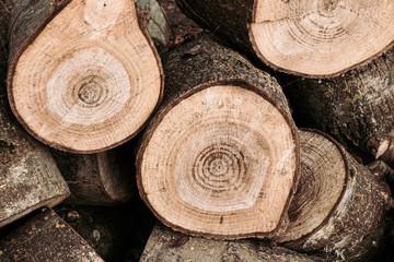 Foto auf AluDibond Brennholz-textur Tas de bois