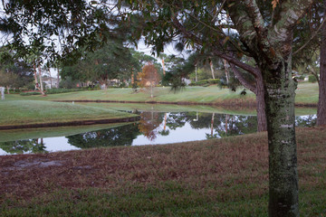 Palmetto Tree Reflections in Pond, Florida