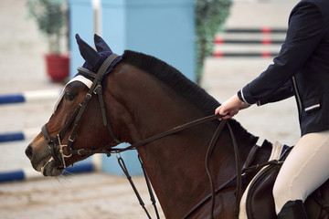 Foto op Plexiglas Rider on a beautiful brown horse awaiting the start of a show jumping