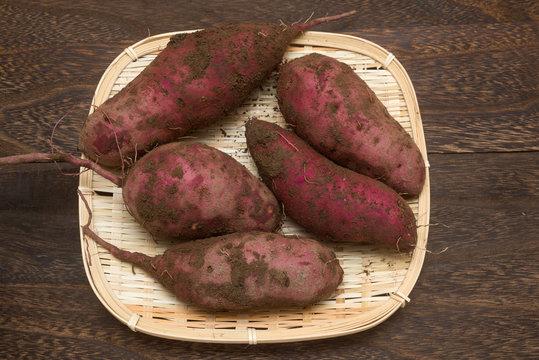 ざるに乗せた収穫したサツマイモ