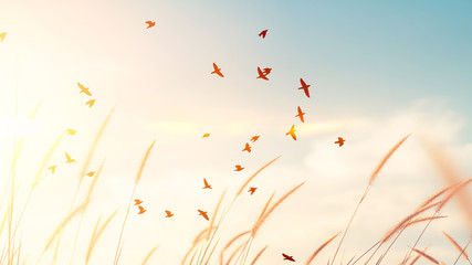 Birds flying and grass flower on sunset sky and cloud abstract background. Freedom and nature...