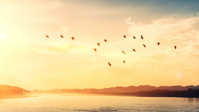 Birds flying over river on sunset sky and clouds abstract background.
