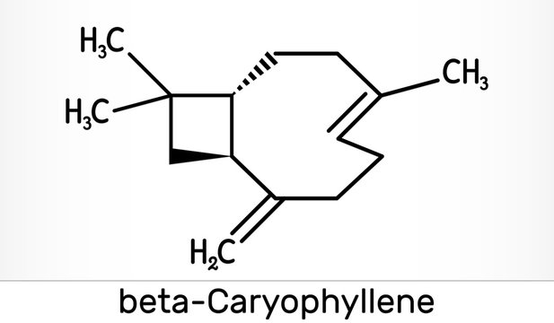 Caryophyllene, beta-Caryophyllene, C15H24 molecule. It is natural bicyclic sesquiterpene that is a constituent of many essential oils. Skeletal chemical formula