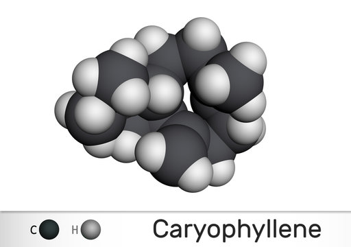Caryophyllene, beta-Caryophyllene, C15H24 molecule. It is natural bicyclic sesquiterpene that is a constituent of many essential oils. Molecular model
