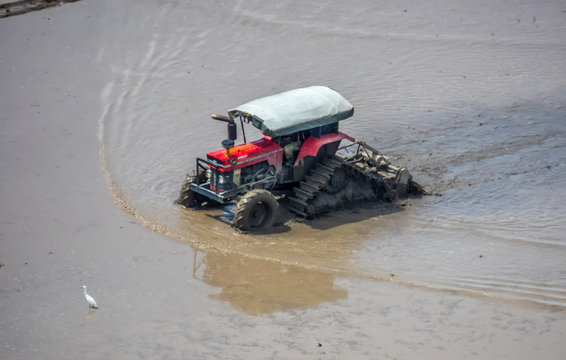 A tractor is doing its job early Mac during the hot season in a paddy field fills with water and mud.