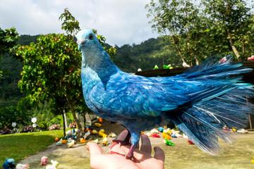 Colorful pigeons at Paradise Park Farm. Koh Samui, Thailand Fototapete