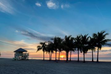 Fototapete - Palm trees on Miami Beach at sunrise in South Beach, Florida