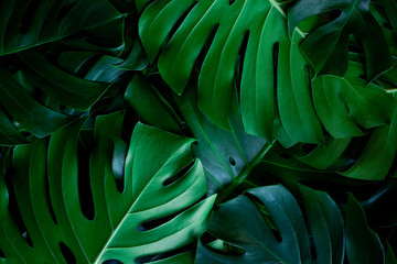 Fotomurales - closeup nature view of green leaf background. Flat lay, dark nature concept, tropical leaf
