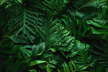 Wall Mural - closeup nature view of green leaf and palms background. Flat lay, dark nature concept, tropical leaf