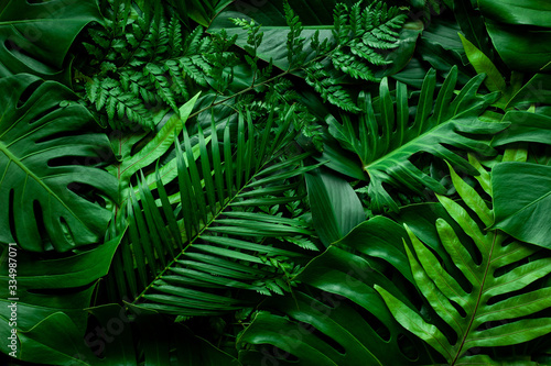 Wall mural closeup nature view of green leaf and palms background. Flat lay, dark nature concept, tropical leaf