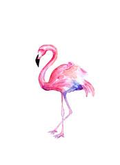 Watercolor draw of flamingo