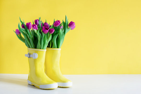 Yellow rain boots and purple tulips over yellow background. Spring background.