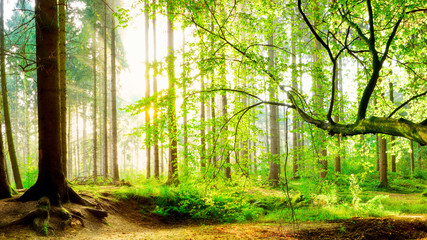 Keuken foto achterwand Bos in mist Spring forest with bright sun shining through the trees