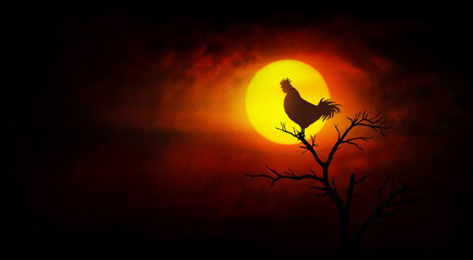Rooster crowing on the tree at dawn