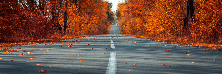 Poster de jardin Automne Banner 3:1. Empty asphalt road in autumn fall forest. Autumnal background... Selective focus