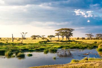 Obraz Lake in the Serengeti Tanzania Africa - fototapety do salonu