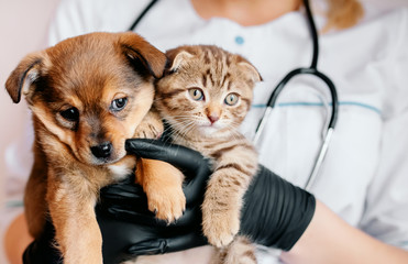 Veterinarian in black gloves with a dog and a cat in his hands Wall mural
