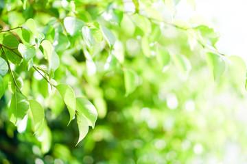 Blur closed up green leaf background. Fototapete