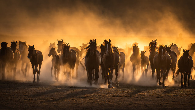 Free horses, left to nature at sunset. Cappadocia, Turkey